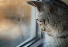 Riflessione della finestra del gatto Fotografia Stock Libera da Diritti