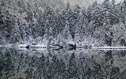 Riflessione della foresta Immagine Stock