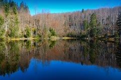 Riflessione della foresta Fotografia Stock