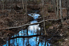 Riflessione della foresta Fotografie Stock