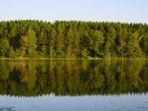 Riflessione della foresta del pino Fotografia Stock Libera da Diritti