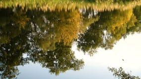 Riflessione della foresta di autunno sul fiume calmo archivi video