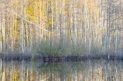 Riflessione della foresta di caduta Fotografia Stock