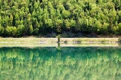 Riflessione della foresta nel passaggio delle alci Immagini Stock