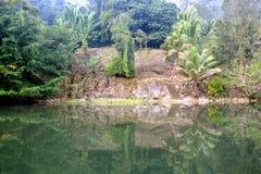 Riflessione della giungla Fotografie Stock