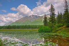 Riflessione della montagna sui rilievi di Lilly Immagine Stock Libera da Diritti