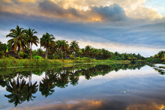Riflessione della palma Fotografie Stock Libere da Diritti