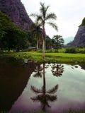 Riflessione della palma sul lago Immagini Stock Libere da Diritti