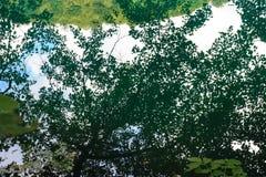 Riflessione della quercia e dei tigli nel lago Fotografie Stock