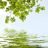 Riflessione delle foglie di acero Immagine Stock Libera da Diritti