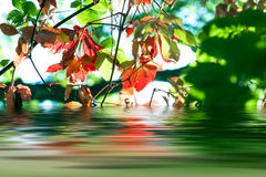 Riflessione delle foglie di autunno fotografie stock