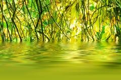 Riflessione delle foglie di autunno immagine stock