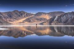 Riflessione delle montagne sul lago Pangong con il fondo del cielo blu Leh, Ladakh, India Immagine Stock