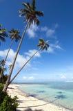 Riflessione delle palme su una spiaggia tropicale Fotografia Stock
