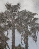 Riflessione delle palme sull'asfalto Immagini Stock