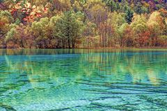Riflessione delle piante variopinte in lago Fotografie Stock Libere da Diritti