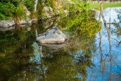 Riflessione dello stagno e tartarughe 2 Fotografia Stock