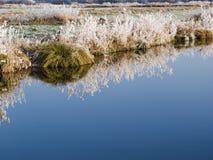 Riflessione di erba congelata Fotografia Stock