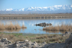 Riflessione di neve al lago Fotografie Stock Libere da Diritti