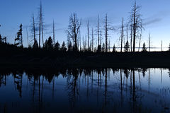 Riflessione di Silhouet parco nazionale nello stagno, Yellowstone Immagini Stock