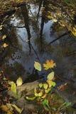 Riflessione di specchio dei tronchi di albero scuri con le foglie di volo e un cielo tempestoso scuro nello stagno, in priorità a Immagine Stock Libera da Diritti