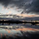 Riflessione di tramonto sopra lo stagno con la volata degli uccelli Fotografia Stock