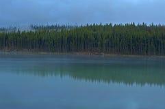 Riflessione di Treeline in Herbert Lake, parco nazionale di Banff immagini stock