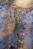 Riflessione di un albero Fotografia Stock