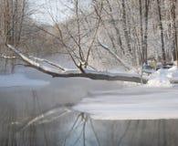 Riflessione di un albero innevato in un lago di congelamento in wi Fotografia Stock Libera da Diritti