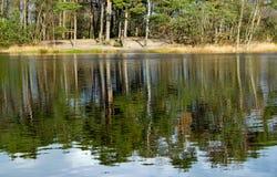 Riflessione di una foresta nell'acqua calma di un lago Immagini Stock Libere da Diritti