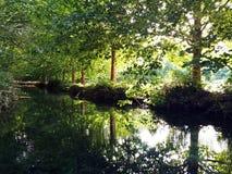 Riflessione in fiume degli alberi alti d'allungamento verdi in una vista simmetrica fotografia stock libera da diritti