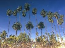 Riflessione inversa della palma nel lago del parco di eco Immagini Stock
