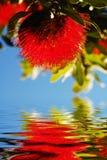 Riflessione natale del fiore Fotografia Stock