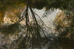 Riflessione nel fiume Fotografie Stock