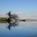 Riflessione nel lago Manyara della piscina Immagini Stock