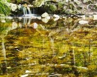 Riflessione sullo stagno del kirstenbosch Immagini Stock
