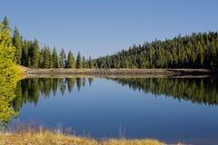 Riflessione Tahoe California dell'albero del lago Immagine Stock