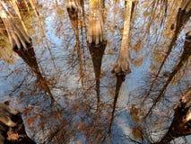 Riflessioni areali in una cupola di Cypress Fotografie Stock Libere da Diritti