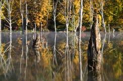 Riflessioni bizzarre al bacino idrico di Monksville Fotografia Stock