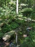 Riflessioni in The Creek Fotografia Stock Libera da Diritti