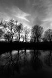 Riflessioni degli alberi Immagine Stock Libera da Diritti