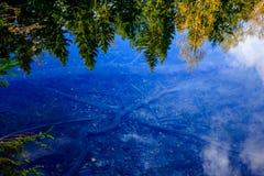 Riflessioni degli alberi fotografia stock