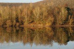 Riflessioni degli alberi alla luce di inverno Fotografia Stock