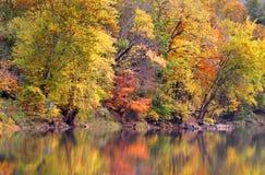 Riflessioni degli alberi di autunno Fotografie Stock