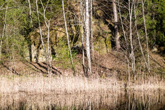 Riflessioni degli alberi nel fiume della montagna di estate Fotografie Stock Libere da Diritti