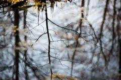 Riflessioni degli alberi nel fiume della montagna di estate Immagini Stock