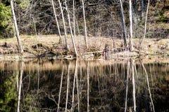 Riflessioni degli alberi nel fiume della montagna di estate Fotografia Stock Libera da Diritti