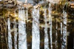 Riflessioni degli alberi nel fiume della montagna di estate Immagine Stock