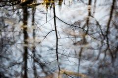 Riflessioni degli alberi nel fiume della montagna di estate Fotografia Stock
