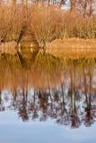 Riflessioni degli alberi nel lago Fotografia Stock
